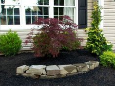 Call attention to a special feature in your front bed by creating a simple slate stone semi-circle. This Lace Leaf Maple stands out from the rest of the plants and gives nice variety to the design. When determining the width of your outline take into account the growth of your plant so it won't outgrow your stone work.