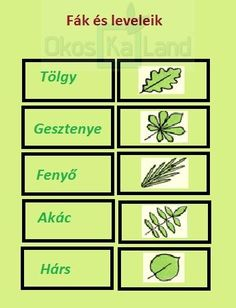 Tanulásmódszertan :: OkosKaLand Toddler Preschool, Preschool Activities, Nature Study, Kids Learning, Free Printables, Language, Teacher, Science, Education