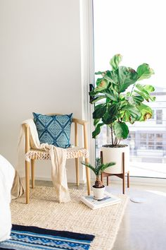 Modern interior with fiddle fig