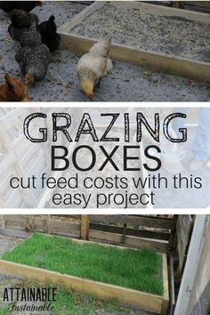Save Money on Chicken Feed - Build these Grazing Boxes for Your Flock! DIY grazing boxes make for happy grass fed chickens. They're a great way to save on the cost of raising backyard chickens (and other poultry), too! Grass Fed Chicken, Chicken Garden, Backyard Chicken Coops, Chicken Runs, Diy Chicken Coop, Chicken Feeders, Chicken Facts, Raising Backyard Chickens, Keeping Chickens