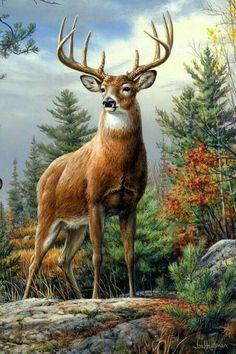 A proud deer in a meadow 🙂 – Tiere Wildlife Paintings, Wildlife Art, Animal Paintings, Animal Drawings, Deer Paintings, Whitetail Deer Pictures, Deer Photos, Deer Drawing, Big Deer
