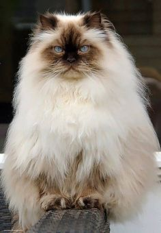 Very Pretty Kitty!