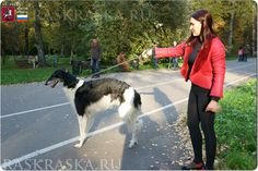 Wolfhound Dog, Russian Wolfhound, Moscow Russia, Dog Photos, Hunting, Photo And Video, Dogs, Doggies, Deer Hunting