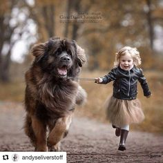 Wow these images of little kids and their big dogs  - #Repost @andyseliverstoff with @repostapp  Fast as the wind #littlekidsandtheirbigdogs #leonberger