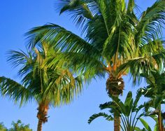 Tropical Paradise Palms Fine Art Print