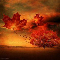Image result for fall wallpaper Autumn Art, Autumn Leaves, Autumn Blaze Maple, Autumn Scenes, Red Tree, Fall Pictures, Fall Pics, Fall Photos, Fall Wallpaper