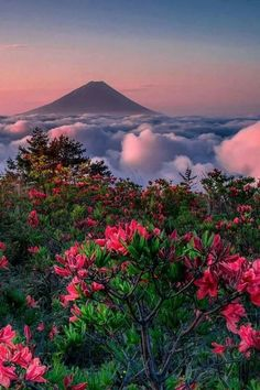 Most beautiful places in world Aesthetic Backgrounds, Aesthetic Wallpapers, Beautiful World, Beautiful Places, Pretty Landscapes, Nature Aesthetic, Jolie Photo, Nature Wallpaper, Nature Pictures