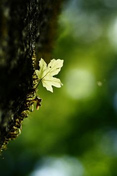♂ Green nature bokeh photography leaf