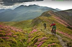 "Mountain Biking Movie: ""Path Finder""   Singletracks Mountain Bike News"