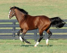Union Rags enjoying life at Lane's End. 2013 will be his first year at stud.