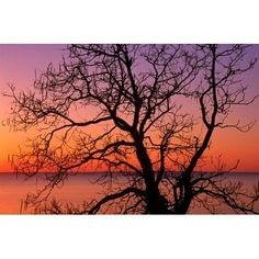 View of ocean through silhouetted tree branches dawn Maryland USA Canvas Art - Panoramic Images (9 x 27)