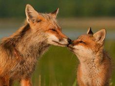 Sweet morning kisses