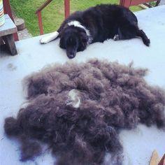Best Way To Get Rid Of Dog S Undercoat