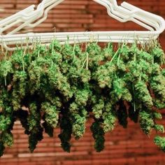 Get all your Daily Cannabis Memes and Pictures here! www.cannabistraininguniversity.com is the leading online cannabis college Like this facebook page for a chance to win big! www.facebook.com/thectu #weed #marijuana #cannabis #cannabisculture #weedst