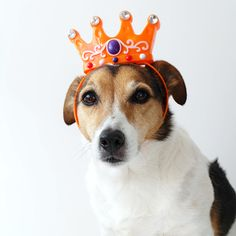 My dog wears it better than me #55, King's Day Edition — No Ordinary Tales