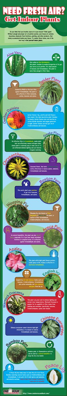 Need Fresh Air? Get Indoor Plants (Info-graphic) Have you ever wondered what you can do to get better air quality in your home? Inside Plants, Cool Plants, Air Plants, Garden Plants, Indoor Plants, Indoor Flowers, Heating And Air Conditioning, Plantar, Indoor Air Quality