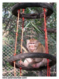 tire & rope monkey-climber