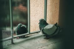 Black Pigeon, Pigeon Pictures, Small Insects, Gray Rock, Flock Of Birds, Big Animals, Best Funny Pictures, Parrot, Free Images