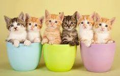 Resultado de imagen para gatos bebes tiernos