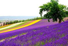 Lavender Fields For-ever. My life, love & my crafts.  lavenderainbows.blogspot.com