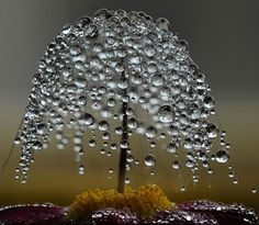 dewdrop tree  some people are so creative and im not one of them :/