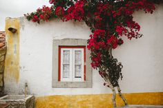 Portugal, Windows And Doors, Portuguese, Picture Quotes, West Coast, My House, Florals, Interior Decorating, Exterior