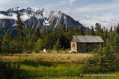 A cabin along the Alaska Highway between Haines Junction, Yukon Territory and Tok, Alaska.
