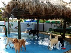 Must check out this doggie day care / water park for Sailor - Shellise Martin - pet resort Luxury Dog Kennels, Pet Boarding, Animal Boarding, Dog Playground, Pet Hotel, Pet Resort, Dog Search, Dog Daycare, Daycare Ideas