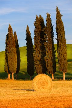 Tuscany - Giants and wheat by Marco Carmassi Val D'orcia Siena Elba, Beautiful World, Beautiful Places, Under The Tuscan Sun, Tuscany Italy, Sorrento Italy, Italy Italy, Naples Italy, Venice Italy