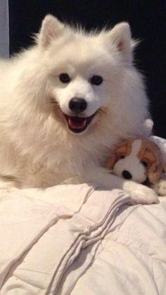 Diesel and teddy