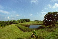 Farm ponds are common in Iowa. Some farmers stock their ponds with bass and blue gill and other varieties for fishing.