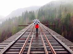 Vance Creek Bridge, Olympia, Washington — by Tiffany Lynn. Quite the hike/drive to find this amazing gem!