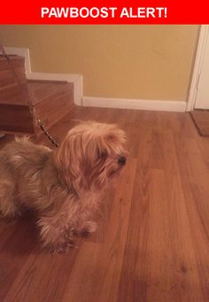Is this your lost pet? Found in Round Rock, TX 78664. Please spread the word so we can find the owner!  Description: Timid. Elderly. Sweet   Nearest Address: Southcreek Drive, Round Rock, TX, United States