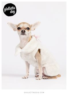 Sunday morning cloth<3! #goodmorning #sunday #sun #happy #Milan #sundaycloth #newcollection #giuliettalovers #fashionchihuahua #white #style