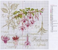 Gallery.ru / Foto # 2 - Etudes de botanique - lenusik445