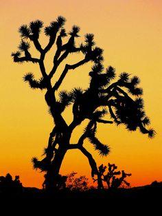 Joshua Tree National Park USA. I went because U2 had an album of the same name