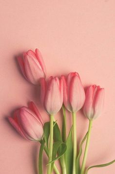 Items similar to Pink Tulip Wall Art - Flower Photograph - Bouquet - Romantic Art - Love - Cottage Chic Wall Art - Modern Minimalist Art - Dreamy Floral Art on Etsy Pink Tulips, Tulips Flowers, Spring Flowers, Beautiful Flowers, Flowers Garden, Colorful Flowers, White Tulips, Rare Flowers, Purple Roses