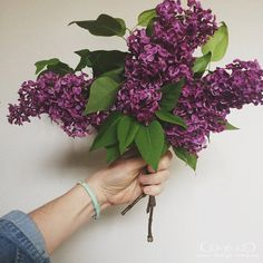 inspired by lilacs