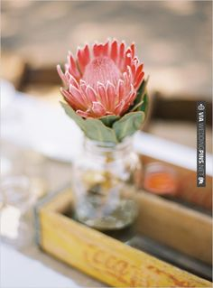 Sacred Really Like - 22 Solutions That Should Change The Tide In Your Daily Life Along With The Lives Of Any Individual Protea Floral Arrangement Flor Protea, Protea Flower, Protea Art, Protea Wedding, Wedding Flowers, Floral Wedding, Floral Centerpieces, Floral Arrangements, Flower Arrangement