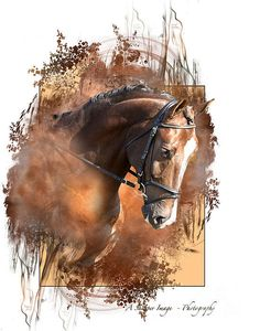 Bay Beauty Art Print by Linda Finstad. All prints are professionally printed, packaged, and shipped within 3 - 4 business days. Choose from multiple sizes and hundreds of frame and mat options. Horse Artwork, Horse Wall Art, Horse Drawings, Animal Drawings, Arte Equina, Watercolor Horse, Cowboy Art, Art Graphique, Equine Art