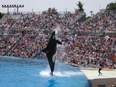 Do Not Be Manipulated By SeaWorld by Cpt Paul Watson