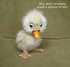 Pass this adorable duckling pic on to a friend you haven't been in contact with for awhile. Let them know they haven't been forgotten.