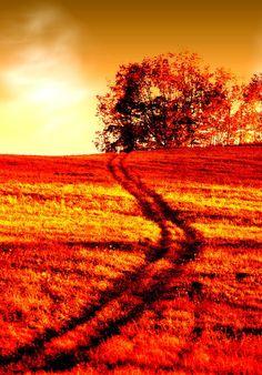 Orange Photography