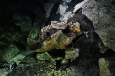 underwater cave holds human bones - Google Search
