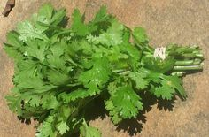 Parsley is known as best cleaning treatment for kidneys and it is natural. Boil and drink a glass a day to cleanse the kidney. Herbal Remedies, Health Remedies, Home Remedies, Natural Remedies, Healthy Drinks, Healthy Tips, Healthy Treats, Healthy Choices, Healthy Foods