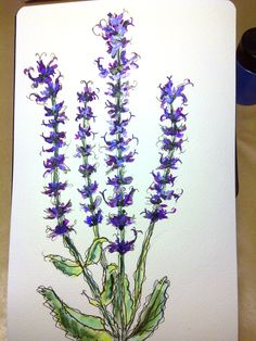 Close up of watercolour sketch... purple flower. Beth McGale