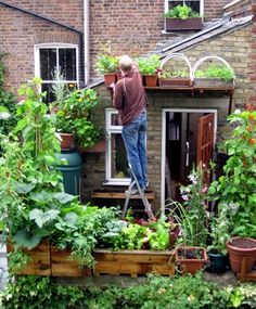 Apartement Apartment Balcony Vegetable Garden Decorating Ideas