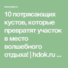 10 потрясающих кустов, которые превратят участок в место волшебного отдыха!   hdok.ru - развивай своё хобби с нами.