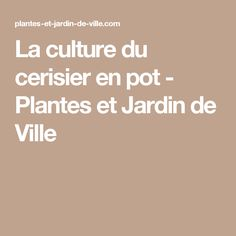 La culture du cerisier en pot - Plantes et Jardin de Ville