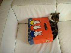 maru in a Miffy box